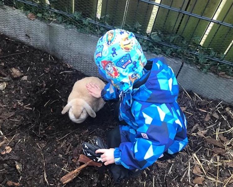 Kaninchen, blaue Frösche